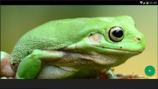 screenshot of Frog Animal Wallpaper version 2.4.3