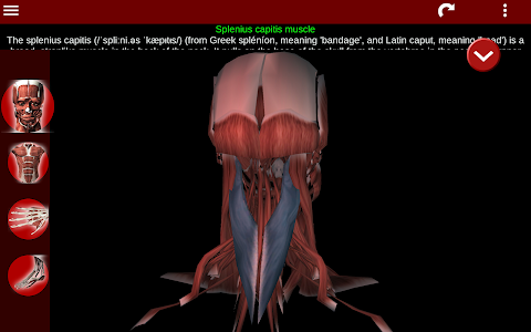 screenshot of Muscular System 3D (anatomy) version 2.0.5