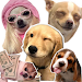 Download Perros Dog Can WAStickerApps Memes Momazos 4.0 APK